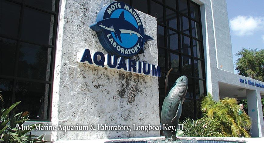 Mote Marine Aquarium Longboat Key